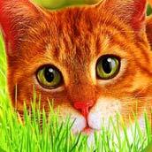 Игра Найди кота: ответы - картинка