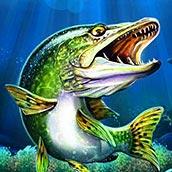 rybalka-na-shhuku
