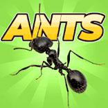 Игра Pocket Ants